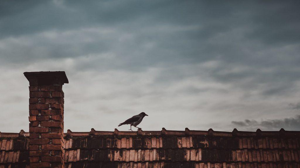 czyszczenie dachów z ptasich odchodów
