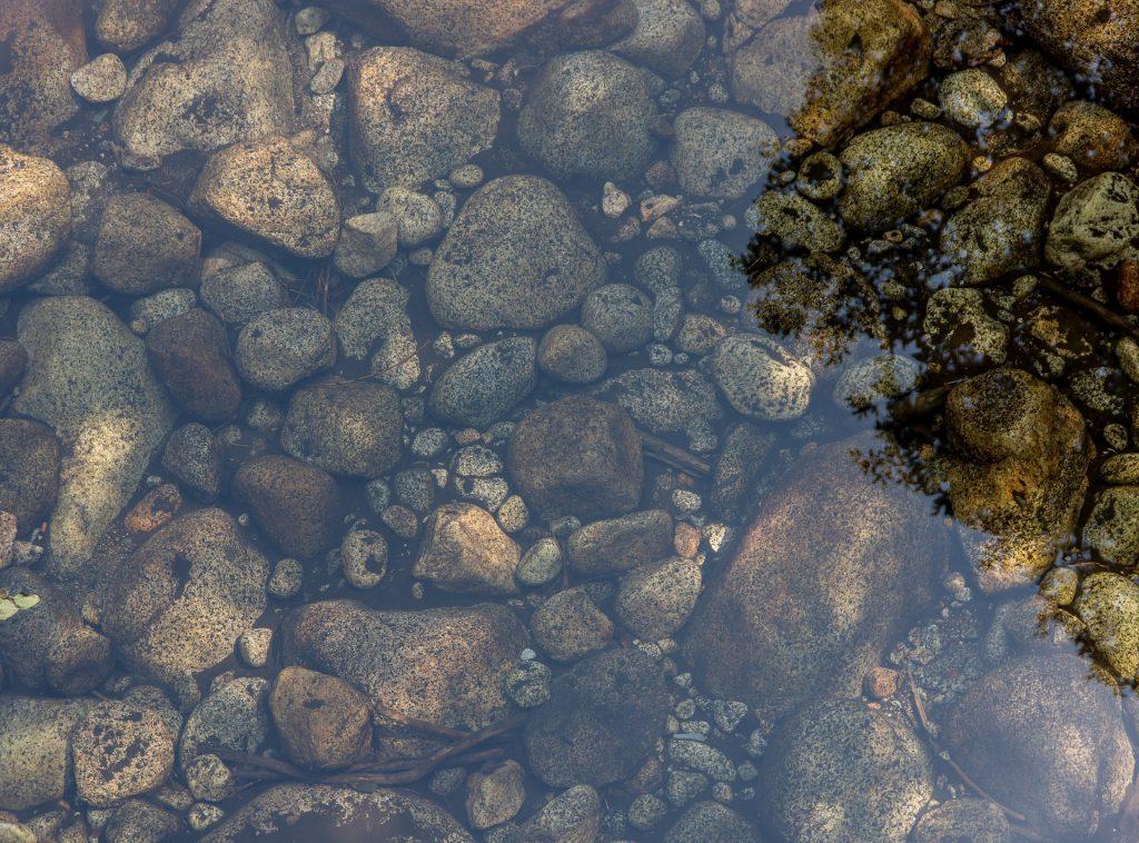 staw kąpielowy - bio basen
