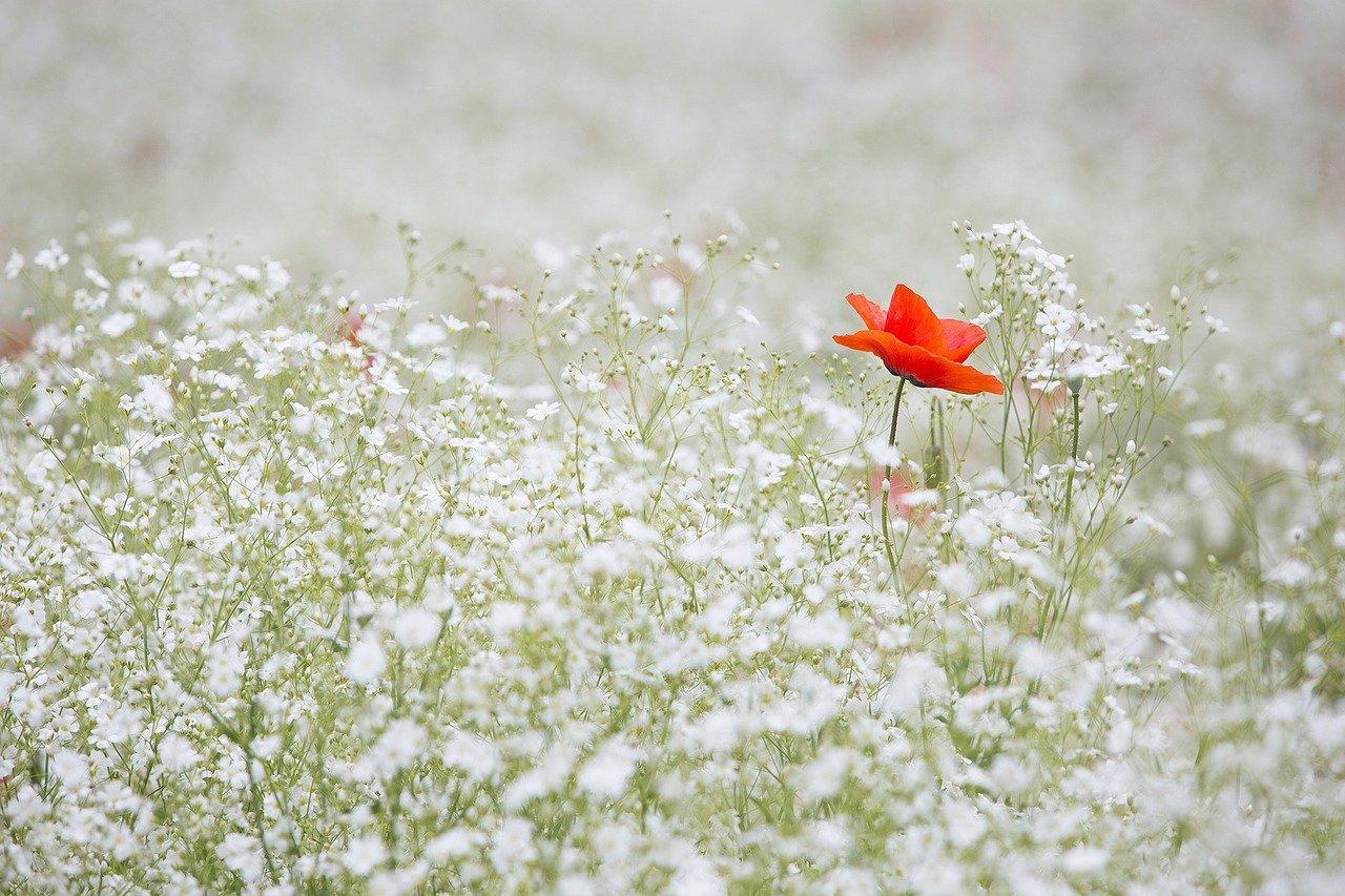rośliny ogrodowe zimujące w gruncie